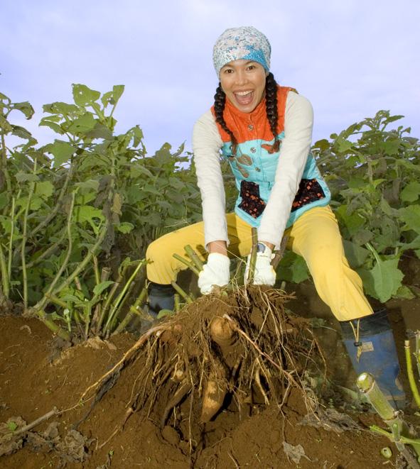 芋を掘る林マヤ