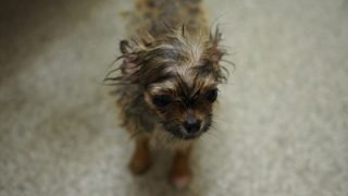 犬の体臭対策に重曹!?効果と危険性について調べてみた