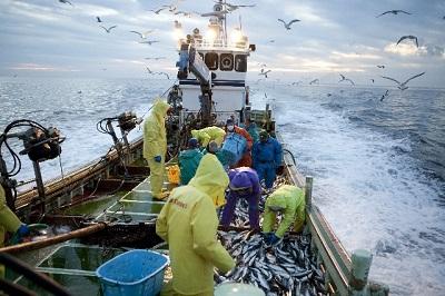 湿気た海の中をカッパを着て働く漁師さん