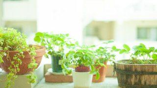 観葉植物の虫対策!安全に予防・駆除する方法