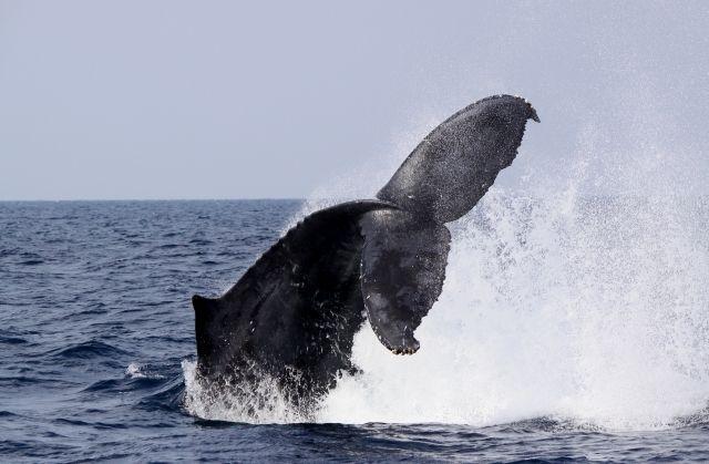 クジラの尻尾
