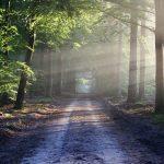 森林の中に光が差し込む道